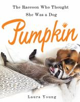 Pumpkin--the Raccoon Who Thought She Was A Dog