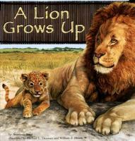 A Lion Grows up