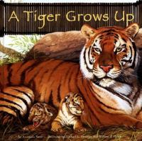 A Tiger Grows up