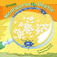 From Mealworm to Beetle