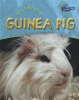 The Life of A Guinea Pig