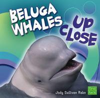 Beluga Whales up Close