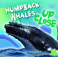 Humpback Whales up Close
