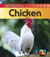 Life Cycle of A -- Chicken
