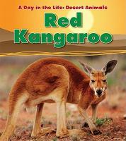 Red Kangaroo