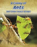 A Colony of Ants, and Other Insect Groups