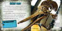 Sea Creature Fossils