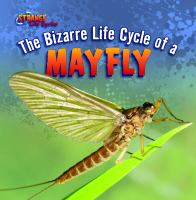 The Bizarre Life Cycle of A Mayfly