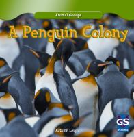 A Penguin Colony
