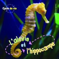 L'alevin et l'hippocampe