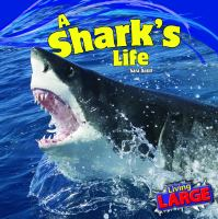 A Shark's Life