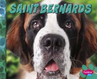 Saint Bernards