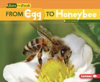 From Egg to Honeybee