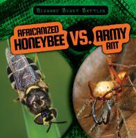 Africanized Honeybee Vs. Army Ant