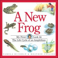A New Frog