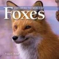 Exploring the World of Foxes