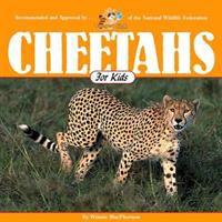 Cheetahs for Kids