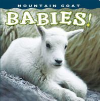 Mountain Goat Babies!