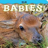 Elk Babies!