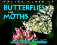 Butterflies And Moths