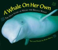 A Whale On Her Own