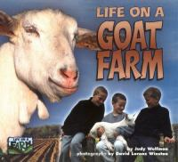 Life on A Goat Farm