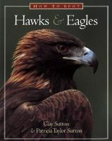 How to Spot Hawks and Eagles