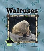 Walruses