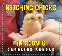 Hatching Chicks in Room 6