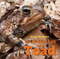 The Hidden Life of the Toad