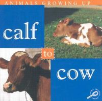 Calf to Cow