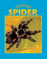 Caring for your Spider