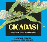 Cicadas!