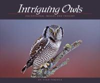 Intriguing Owls