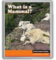 Image: What Is A Mammal?