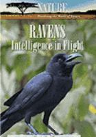 Ravens, Intelligence In Flight