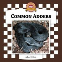 Common Adders