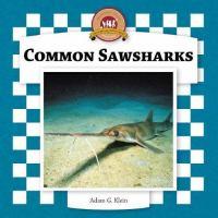 Common Sawsharks