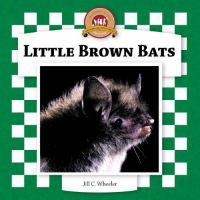 Little Brown Bats
