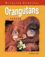 Orangutans in Danger