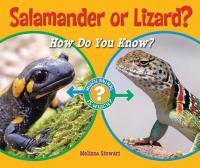Salamander or Lizard