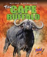 The Cape Buffalo