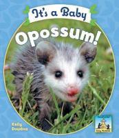 It's A Baby Opossum!
