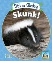 It's A Baby Skunk!