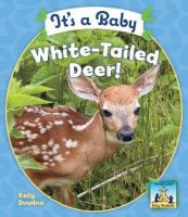 It's A Baby White-tailed Deer!