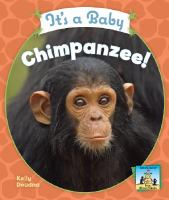 It's A Baby Chimpanzee!