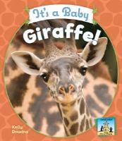 It's A Baby Giraffe!