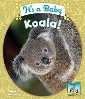 It's A Baby Koala!