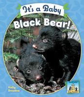 It's A Baby Black Bear!