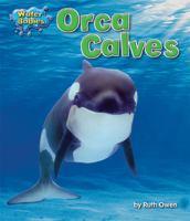 Orca Calves